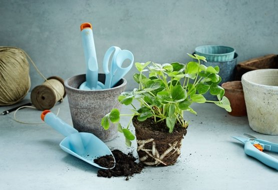 Make your garden even more colourful